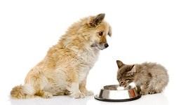 Venujem sa výžive a podpore zdravia u zvierat