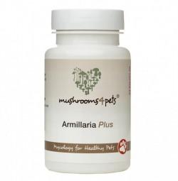 Armillaria Plus čínske huby 60kps